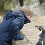 4-feeding-the-penguins-at-burford